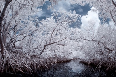 Mangrove Dreams