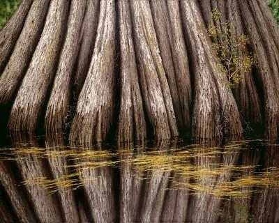 Big Cypress