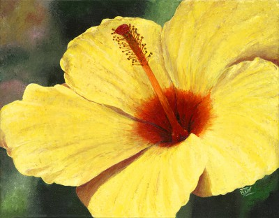 Hibiscus Morning