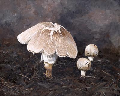 Mushrooms in Mulch