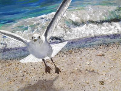 Seagull Comin' Atcha