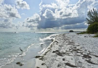 Sky-Lit Sea