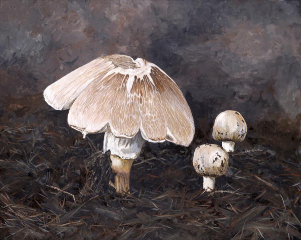 Mushrooms in Mulch