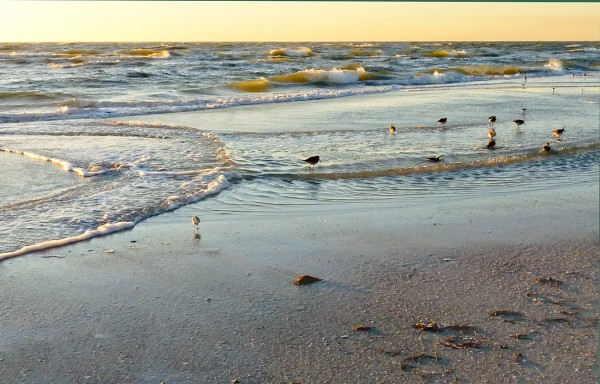 Wading Before Sunset